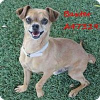 Adopt A Pet :: BAXTER - Castaic, CA