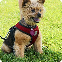 Adopt A Pet :: Junior - Rigaud, QC