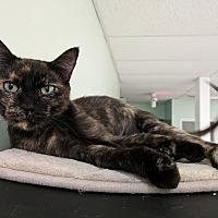 Adopt A Pet :: Delilah - Austintown, OH