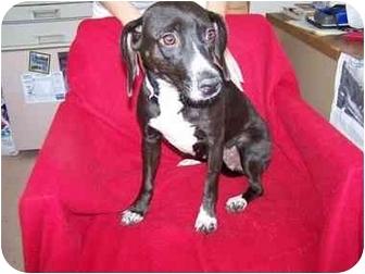 Beagle Mix Dog for adoption in Anna, Illinois - ELLIE
