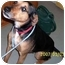 Photo 3 - Beagle/German Shepherd Dog Mix Dog for adoption in Marseilles, Illinois - ShiverMeTimbers