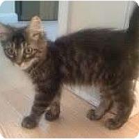 Adopt A Pet :: Smokey - Arlington, VA