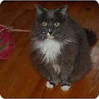Adopt A Pet :: Cleopatra - Riverside, RI