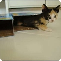 Adopt A Pet :: Ginger - Coral Springs, FL