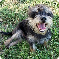 Adopt A Pet :: Marsha - San Angelo, TX