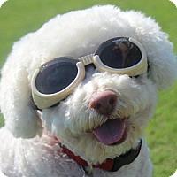 Adopt A Pet :: Floyd - La Costa, CA