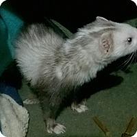 Adopt A Pet :: Scout - Spokane Valley, WA