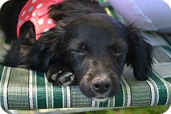 Terrier (Unknown Type, Medium) Mix Puppy for adoption in Beachwood, Ohio - Venus