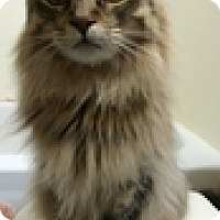 Adopt A Pet :: Mouse - Vancouver, BC