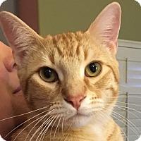 Adopt A Pet :: Sonny - Winchester, CA