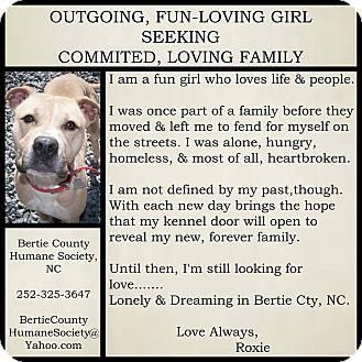 Boxer Mix Dog for adoption in Powellsville, North Carolina - ROXANNE