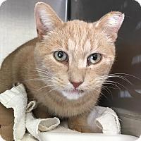 Adopt A Pet :: Bob Parker - East Brunswick, NJ