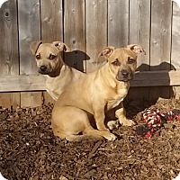 Adopt A Pet :: Chase and Popi - Bardonia, NY