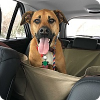 Adopt A Pet :: Buddy in CT - East Hartford, CT