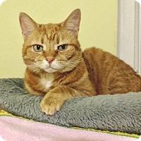 Adopt A Pet :: Merlot -Adoption Pending! - Colmar, PA
