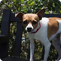 Adopt A Pet :: King Triton - Lakeland, FL