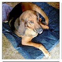 Adopt A Pet :: LUCY super URGENT - Sacramento, CA