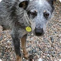 Adopt A Pet :: Melissa - Westminster, CO