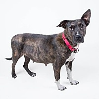 Adopt A Pet :: Aspen - Decatur, GA