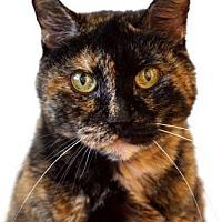 Adopt A Pet :: Gigi - Reno, NV