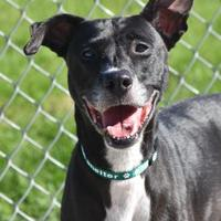Adopt A Pet :: 10097 Noelle - Erie, PA