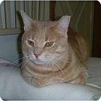 Adopt A Pet :: Sonny - Hamburg, NY