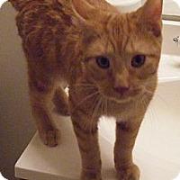Adopt A Pet :: Hyatt - Kensington, MD