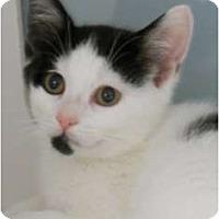 Adopt A Pet :: Spot - Maywood, NJ