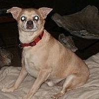 Adopt A Pet :: Leon - Grantville, PA