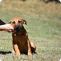 Adopt A Pet :: Jean Louise - South Dennis, MA