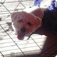Adopt A Pet :: Rocket! - North Hollywood, CA