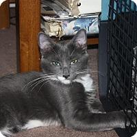 Adopt A Pet :: Dakota (LE) - Little Falls, NJ