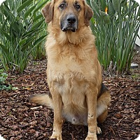 Adopt A Pet :: Walter - Rancho Palos Verdes, CA