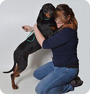 Hound (Unknown Type) Mix Dog for adoption in Fruit Heights, Utah - Tasha