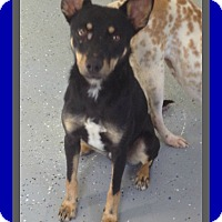 Adopt A Pet :: TOBY - Halifax, NS