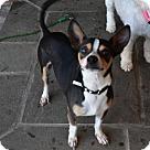 Adopt A Pet :: Roman