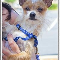 Adopt A Pet :: Yoda - Redding, CA