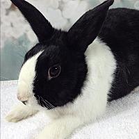 Adopt A Pet :: Dudley - Auburn, CA