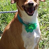 Adopt A Pet :: Lucy - Bandera, TX