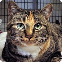 Adopt A Pet :: Fern - Grants Pass, OR