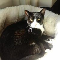 Adopt A Pet :: Jolene - Elizabeth City, NC