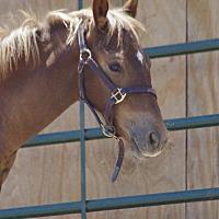 Adopt A Pet :: Fabio - Hartville, WY