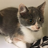 Adopt A Pet :: Salsa - Riverside, CA