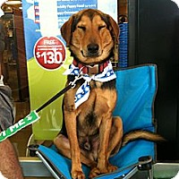 Adopt A Pet :: Will - Baton Rouge, LA