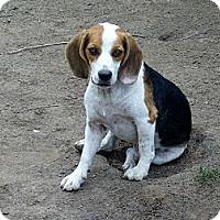 Adopt A Pet :: Tater - Glenpool, OK
