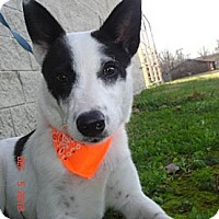Adopt A Pet :: Herbie - Stilwell, OK