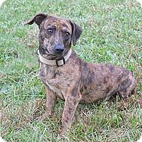 Adopt A Pet :: Dan - Mocksville, NC
