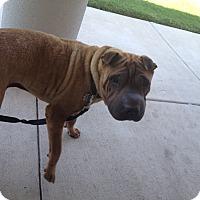 Adopt A Pet :: Hercules - Houston, TX