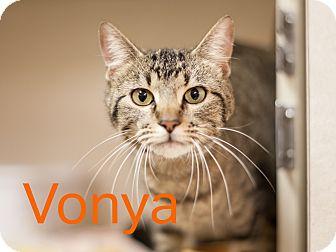 Domestic Shorthair Cat for adoption in Dallas, Texas - Vonya