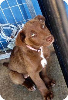 Labrador Retriever Mix Dog for adoption in Detroit Lakes, Minnesota - June